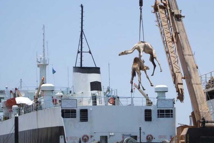 Esta foto de algo que pasa en Arabia Saudí es demasiado genial para no ponerla. Fuente: Flickr