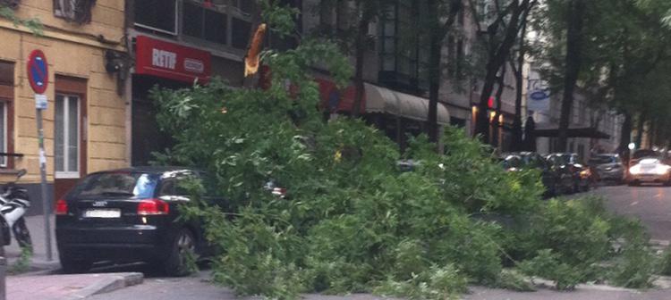 Una rama cae sobre un coche en la calle Vallehermoso