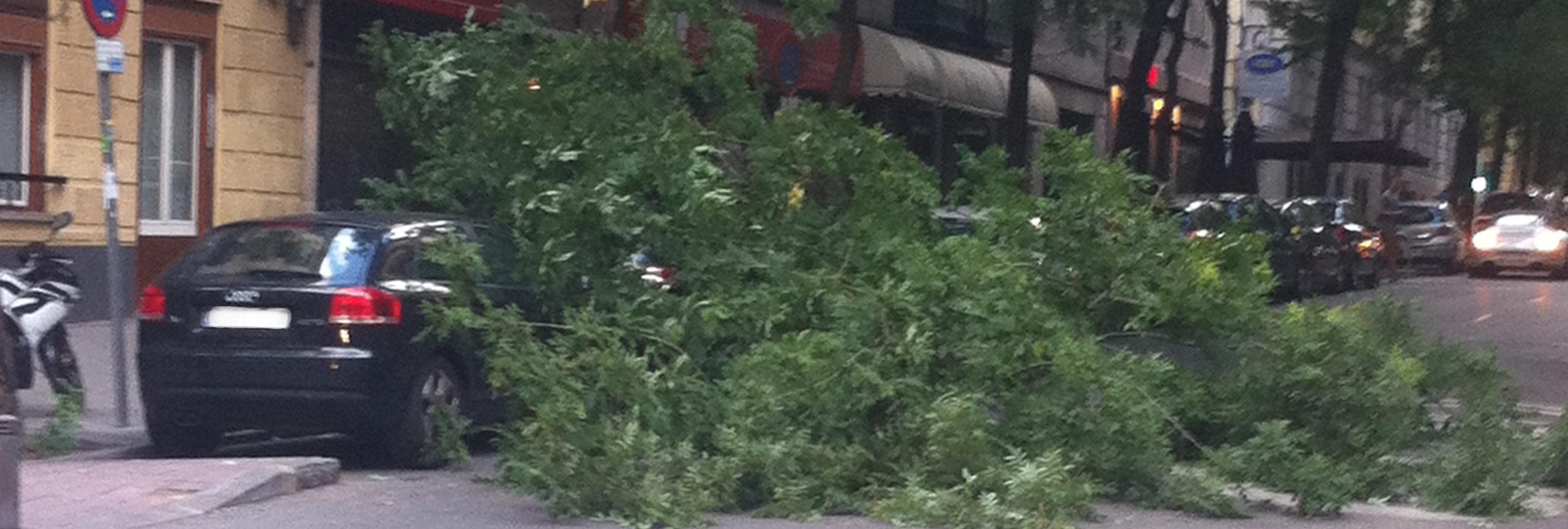 Ana Botella no ha solucionado el problema de la caída de árboles en Madrid
