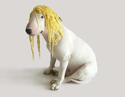 """Mantesso, dueño de Jimmy Choo: """"No existen perros peligrosos, lo que hay es gente peligrosa e idiota"""""""