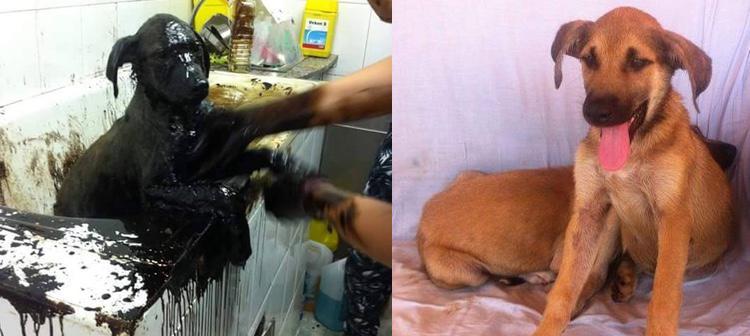 El antes y el después de uno de los cachorros, en camino de recuperarse