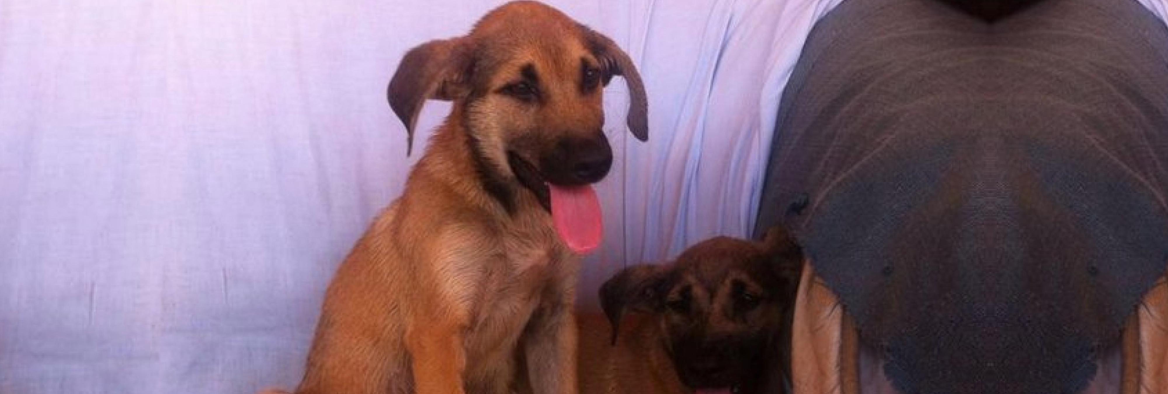 Los cachorros Chapa y Pote se recuperan después de que su dueño los arrojara a una balsa con alquitrán