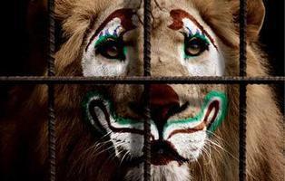 Cataluña, a un paso de prohibir el uso de animales salvajes en los circos