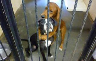El abrazo que salvó del sacrificio a dos perros