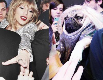 Recrean fotos del Instagram de Taylor Swift con Doug the Pug, un perro también muy hipster