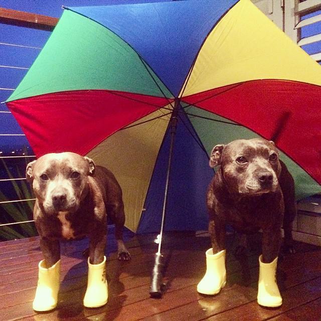 Preparados para un día de lluvia