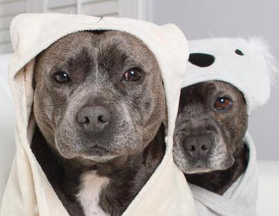 Darren y Phillip, la pareja de perros más adorable que has visto nunca