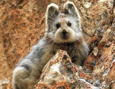 Los 10 animales más tiernos en peligro de extinción