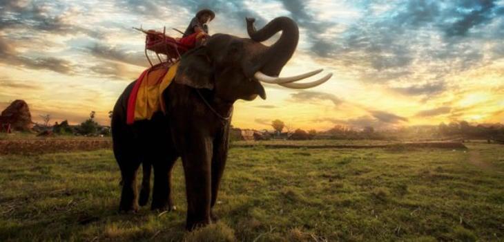 Una experiencia única e irrepetible: montar en elefante
