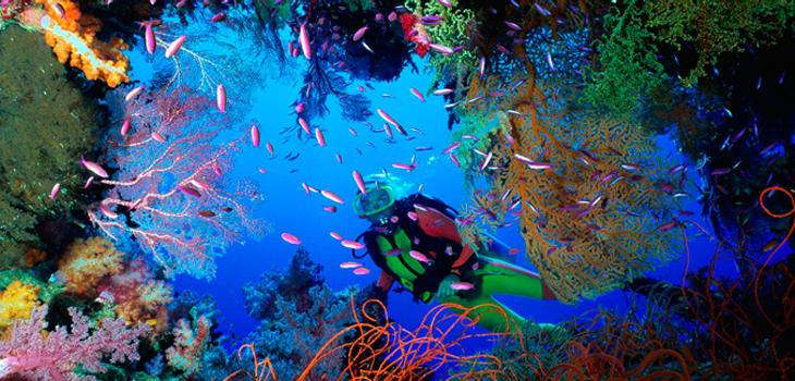 Bucea en el mayor arrecife de coral del mundo