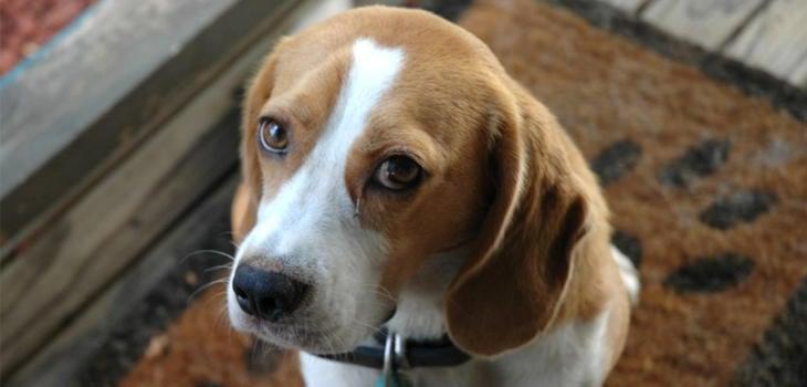 Antes de comprar un animal, adopta una mascota