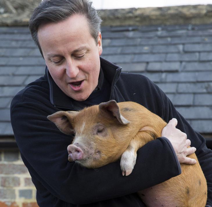 David Cameron con un cerdito