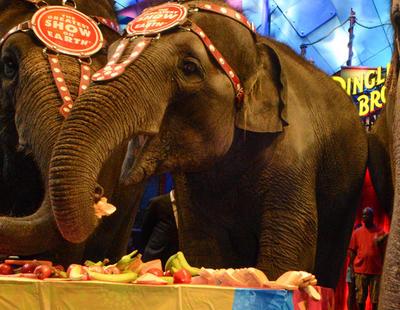 Holanda se une a los países que prohíben los animales en los circos
