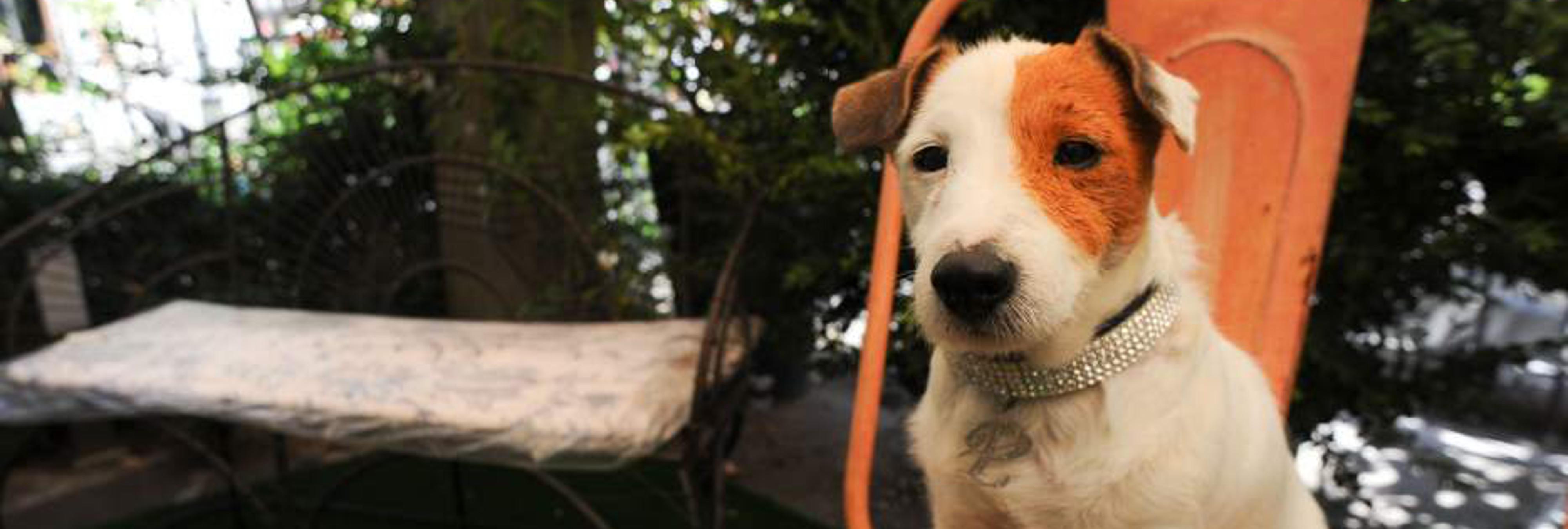 8 perros que se hicieron famosos en televisión