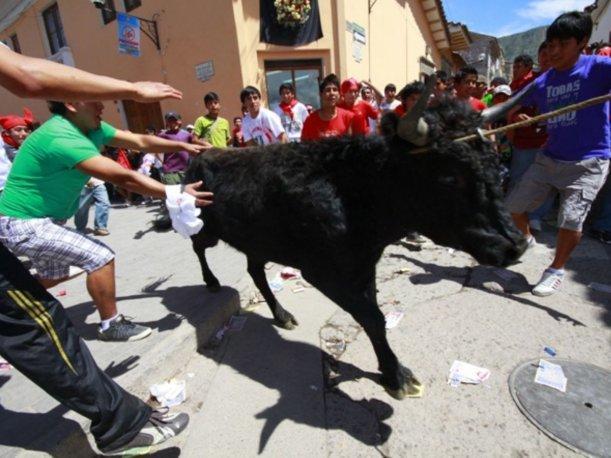 No mostrados en esta foto; botellazos en la cabeza del animal, lanzas de pica, gente con corazón
