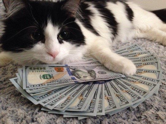 Moneycat, compártelo
