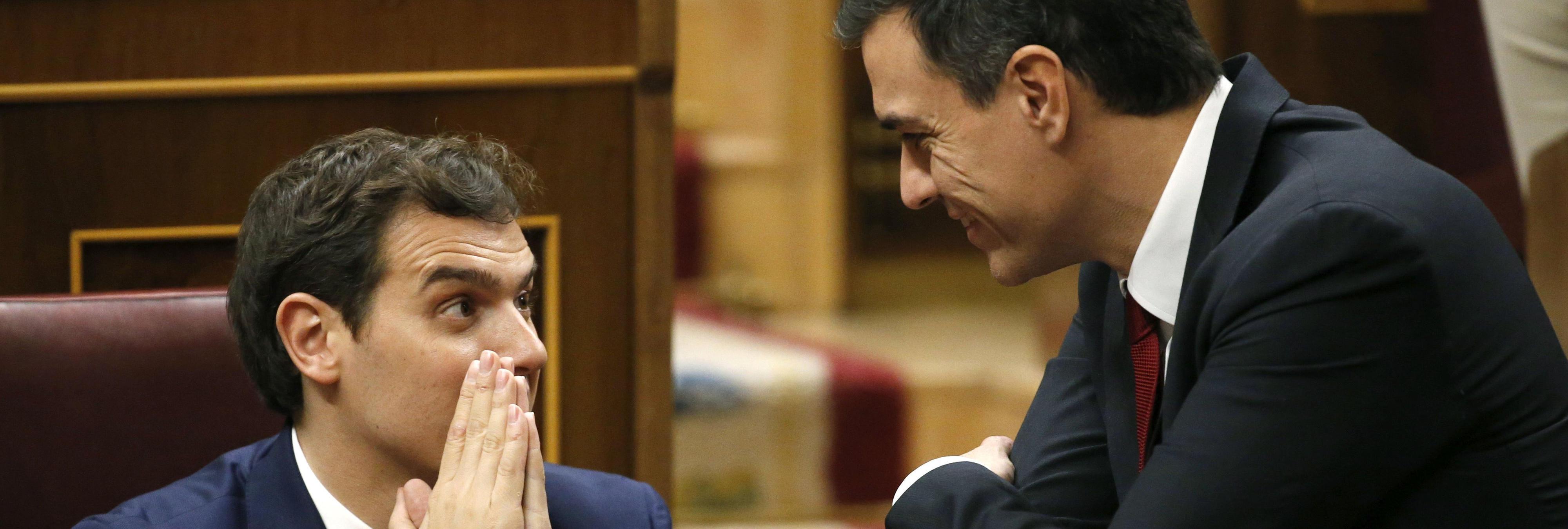 En directo: El discurso de investidura de Pedro Sánchez comentado por gatitos