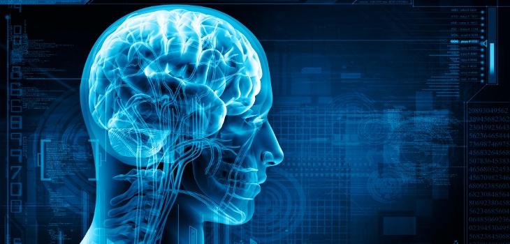 Los hemisferios en el cerebro, más mitos que realidades