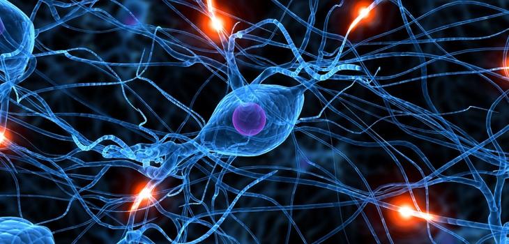 Creamos neuronas nuevas toda la vida