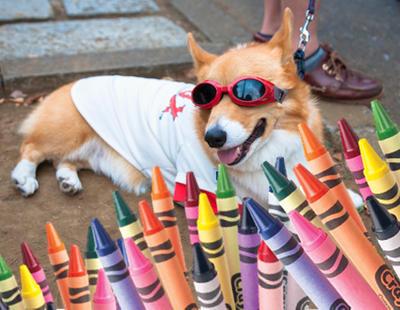 Mira lo que hace este perro artista con una caja de ceras de colores