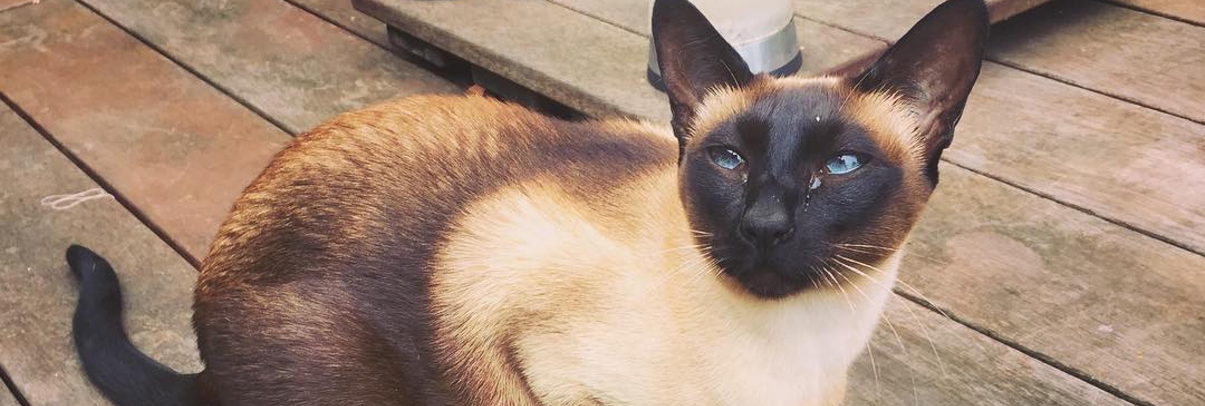 Brigit, la gata cleptómana que robaba ropa interior