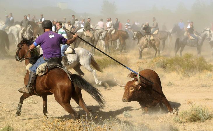 Espaldarazo de Castilla y León al Toro de la Vega