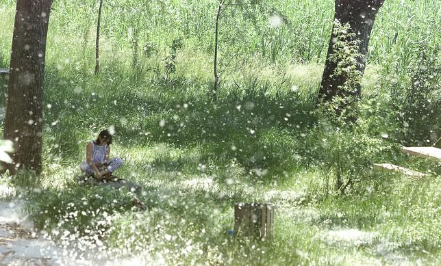 Un tercio de la población madrileña tiene alergia al polen