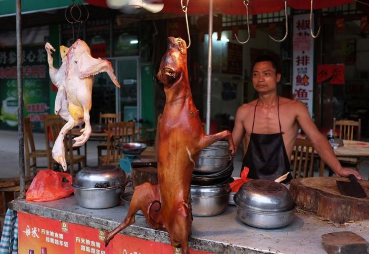 Vendedor de carne de perro en China
