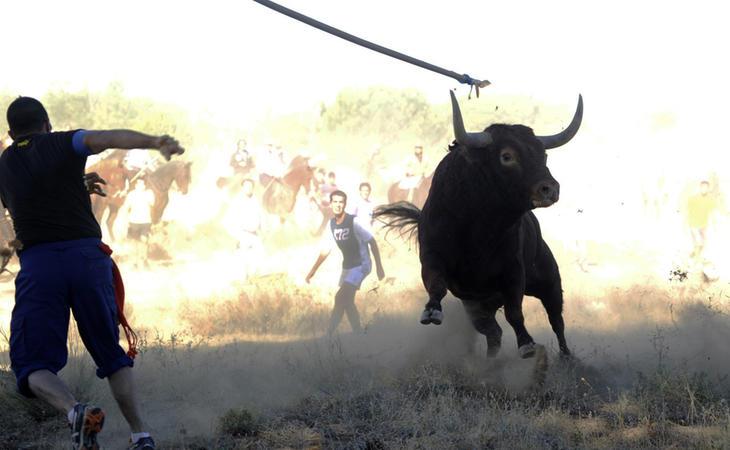 La estocada definitiva a la celebración del Toro de la Vega