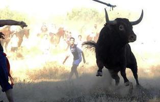 Prohíben definitivamente el Toro de la Vega por no adaptarse a la nueva normativa