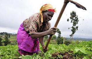 África tiene una técnica agrícola de más de 7 siglos que planta cara al cambio climático