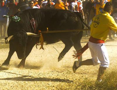 Tordesillas presenta el festejo que sustituirá al Toro de la Vega