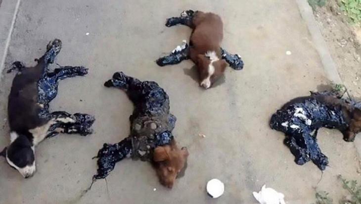 Cuatro perros pegados al suelo con alquitrán en Rumanía
