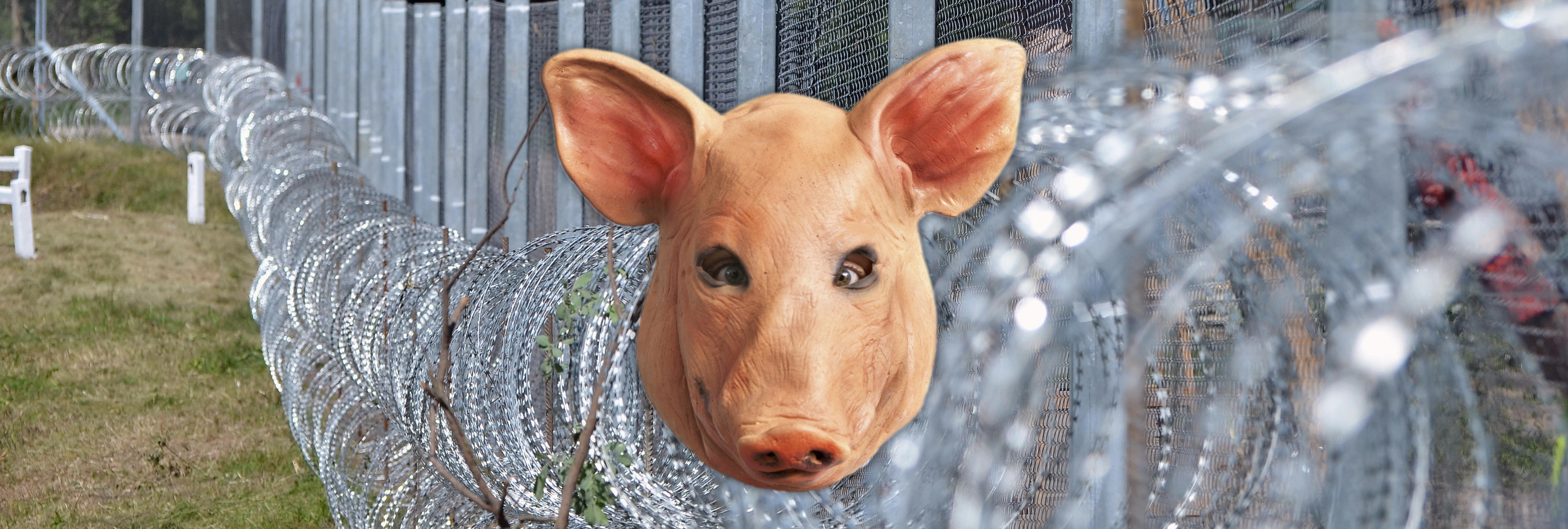Un eurodiputado húngaro propone colgar cabezas de cerdo en las fronteras para repeler refugiados