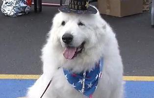 Duke, el perro que ha sido reelegido alcalde en EEUU durante 3 años