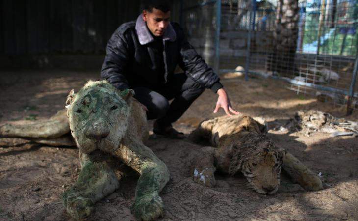 Los animales disecados convivían con los vivos