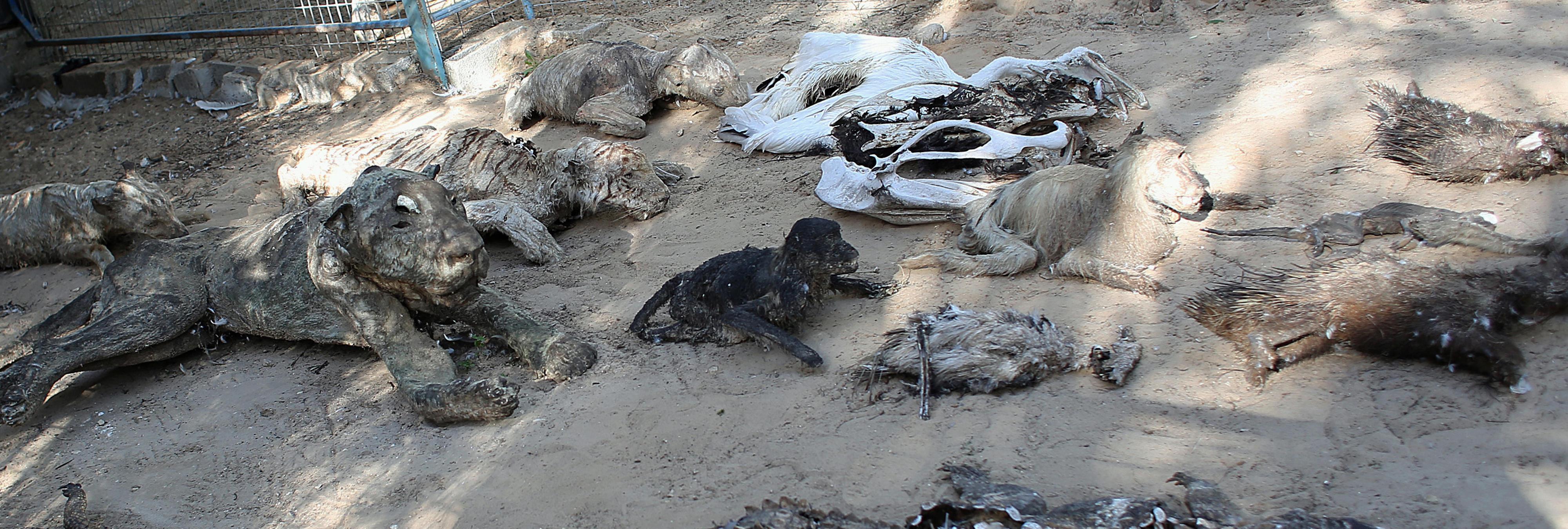 Una ONG cierra el zoo en el que convivían animales vivos y muertos