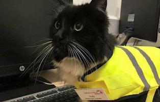Ascienden a una gata en una estación de tren por hacer bien su trabajo