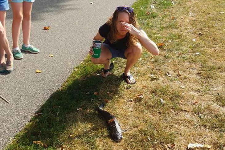 El pez caído del cielo era un bagre o pez gato (Facebook: Cameron Abrams)