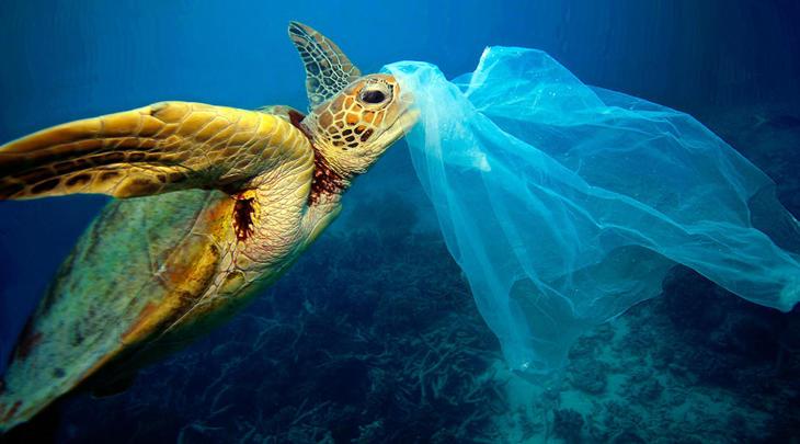 No es una medusa, podría ser tu bolsa del Mercadona