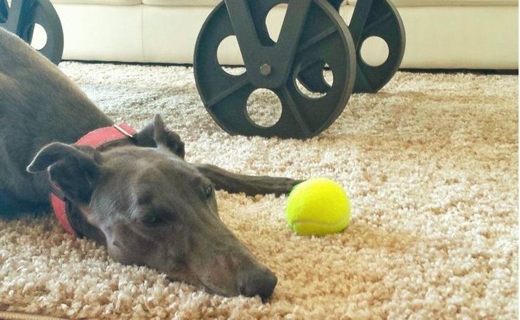 Pebbles siguió jugando con la pelota que usaba con Ruby