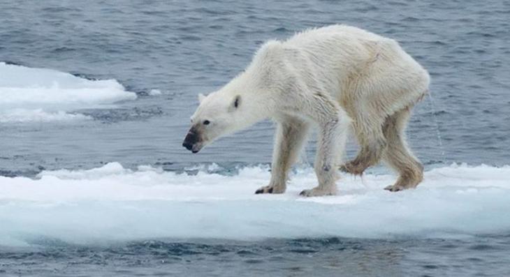 Las consecuencias atroces del cambio climático ya tardarán generaciones en solucionarse