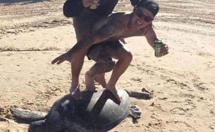 Los jóvenes sobre la tortuga