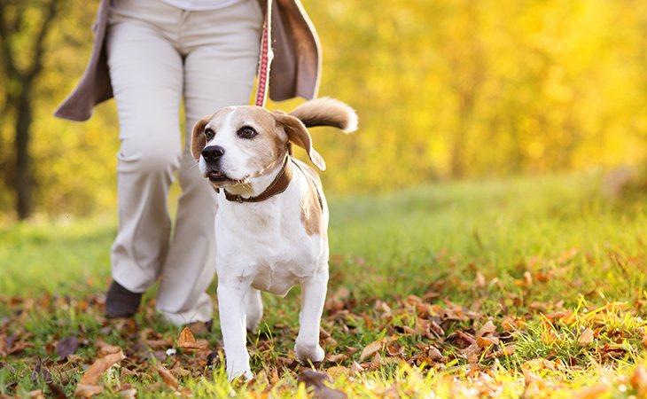Si el propietario deja a su mascota, habrá que pasearla y darle de comer