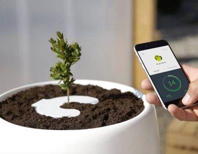 ¿Cómo convertirse en un árbol después de morir? La ciencia descubre una técnica para ello