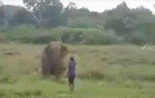 Muere aplastado tras intentar hipnotizar a un elefante