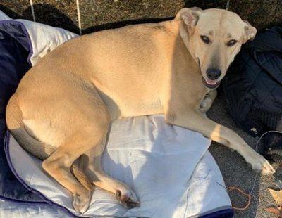 """El Ayuntamiento de Barcelona concluye que la actuación del policía que mató a la perra Sota fue """"proporcional"""""""