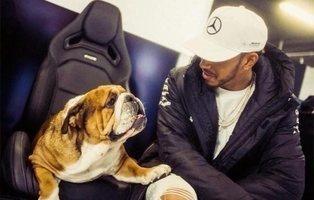 El 'sueldazo' que se embolsa Hamilton por cada foto de su perro