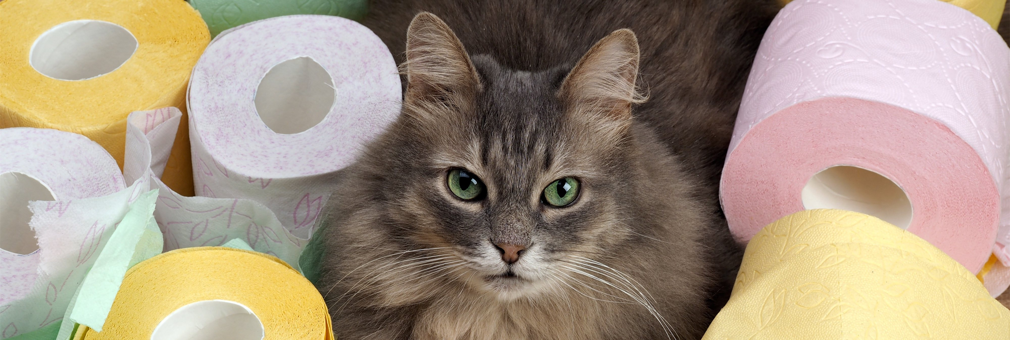 La historia detrás de CitiKitty: El invento millonario por el que tu gato usará el WC