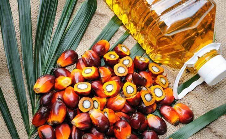 Deberíamos evitar el aceite de palma